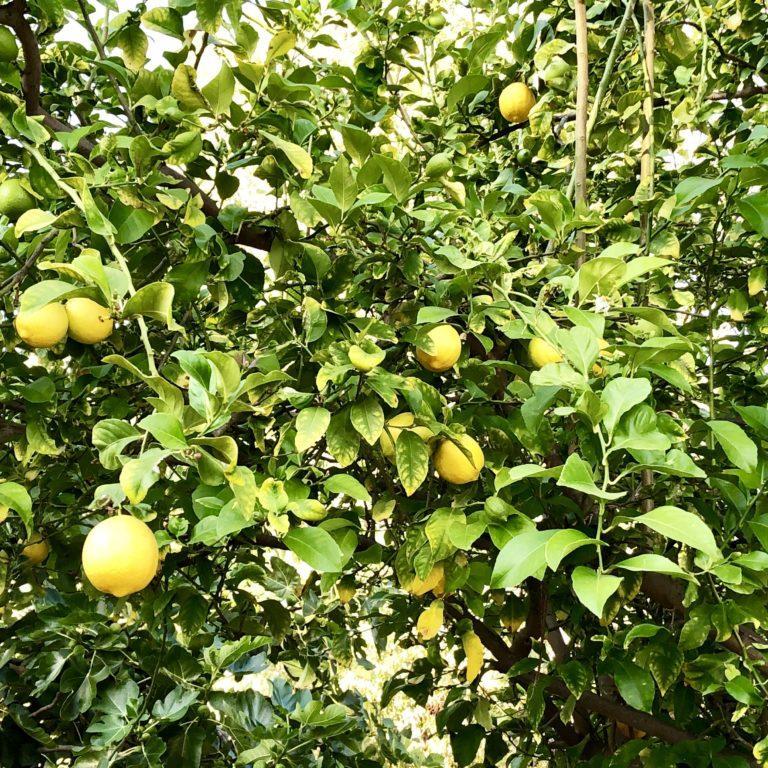 2019 Lemons